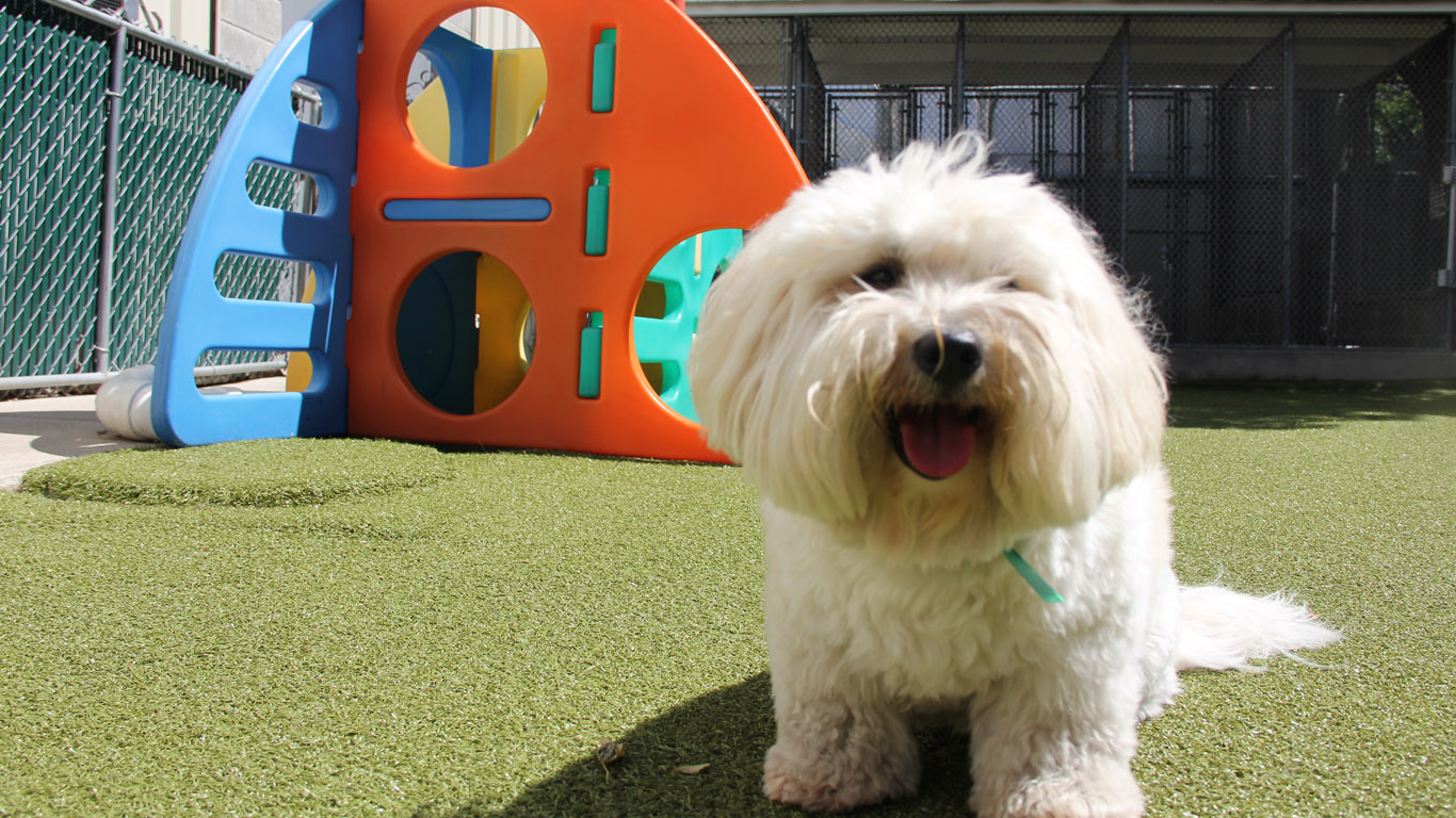 Home - Willow Pet Hotel